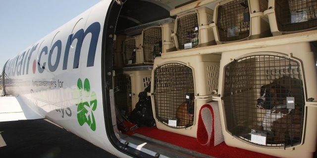 Mascotas en la bodega de un avión.