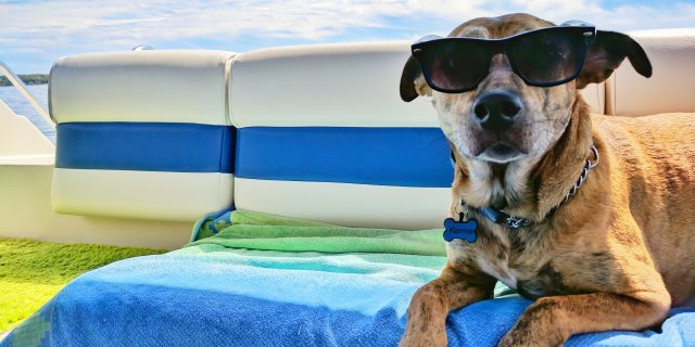Perro de vacaciones con su dueño.