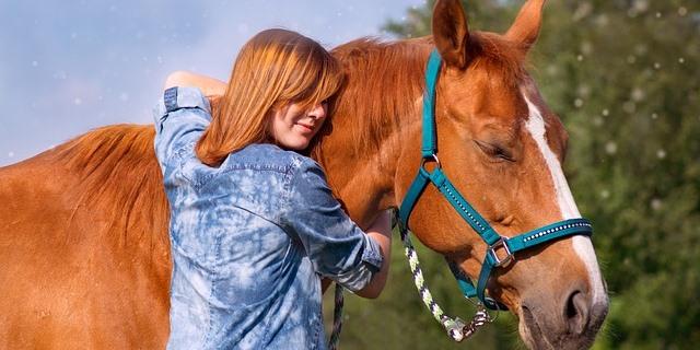 los caballos entienden las emociones humanas