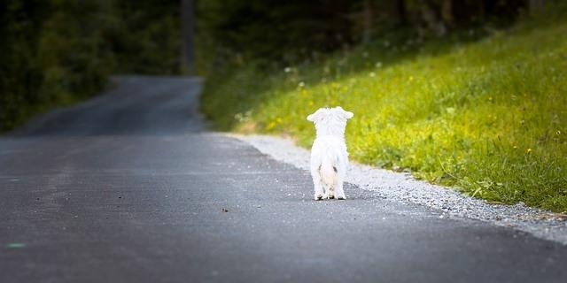 Perro abandonado en la carretera.