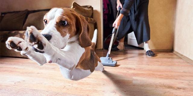 perro con miedo huyendo del aspirador