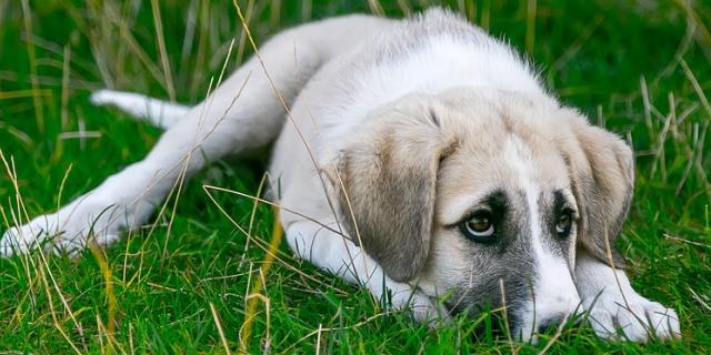 perro con miedos y temores