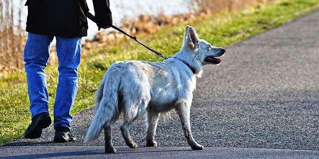 Perro y su propietario pasean.