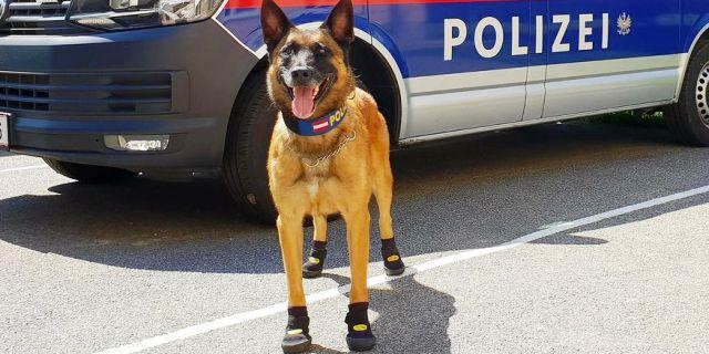 Perro Policía con sus zapatos puestos.