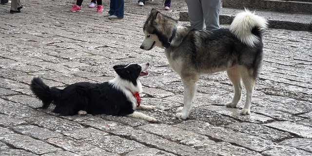 Perros sueltos en una calle.