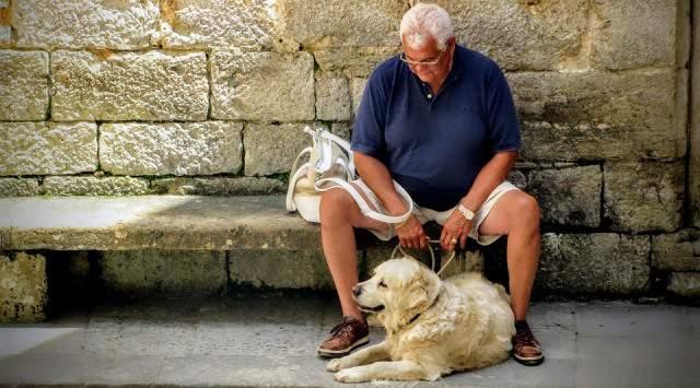 La terapia asistida con perros aumenta la felicidad