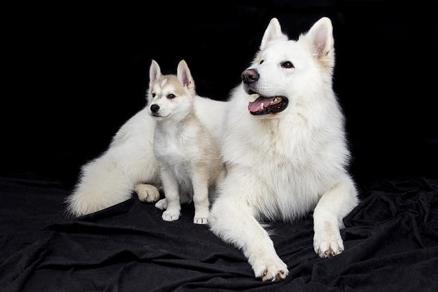 trucos para presentar a perros