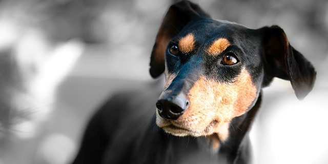 foto de un perro negro