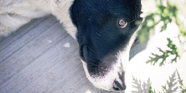 foto de un perro blanco y negro