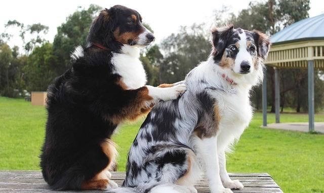 perros que son mejores amigos