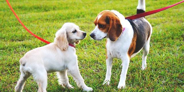 consejos para presentar a unos perros con otros