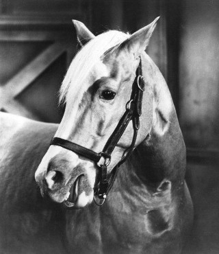 Bamboo Harvester el caballo que interpretaba a Mr Ed