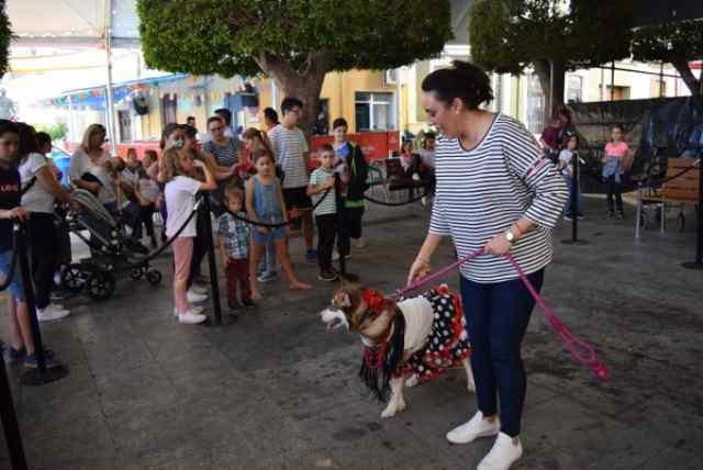 Ella, la perra Husky Siberiana, tercera en el concurso.