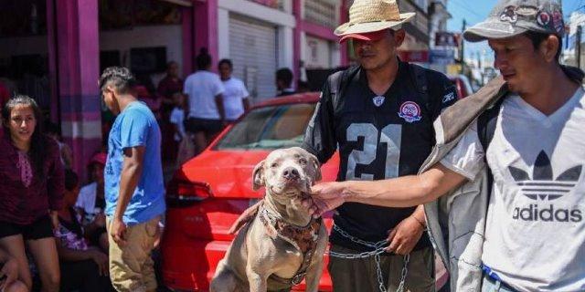 Bolillo, el perro que viaja en una caravana.