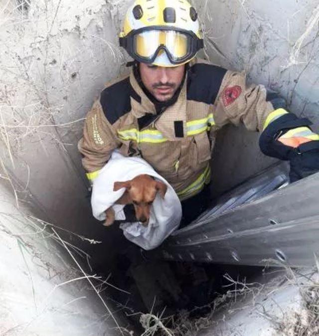 bombero del SPEIS rescatando al perro del fondo del pozo