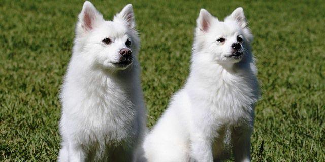 Perros juegan en un parque canino.