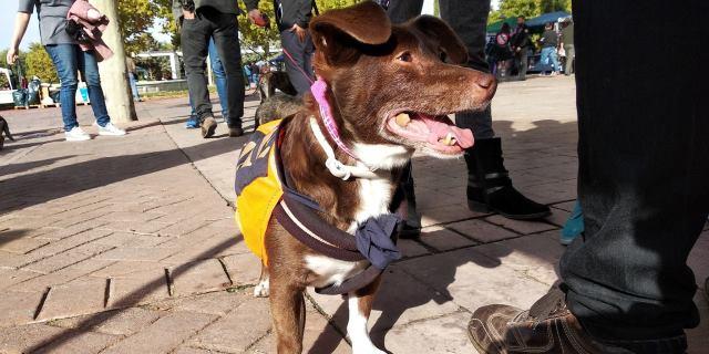 perro adoptado en la feria de adopción de Móstoles