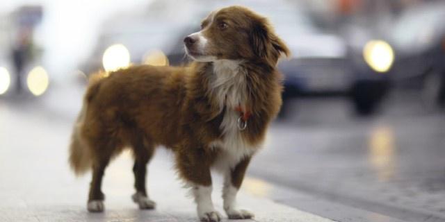 Perro pasea en la calle.