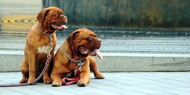 Perros descansan en una plaza.