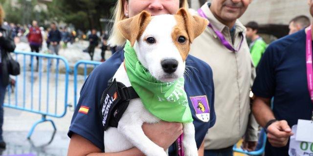 Un perro tras la llegada de la carrera de Perrotón (Foto: Ayuntamiento de Madrid).