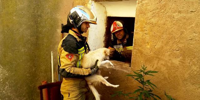 El rescate por parte de los bomberos del perro (Foto: Diputación de Zaragoza).