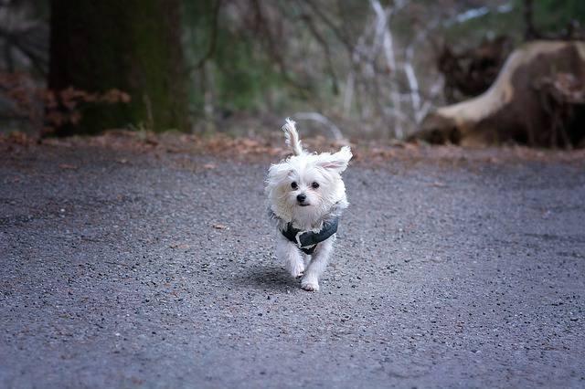 No todos los perros necesitan abrigos.