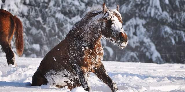 Todo lo que debes saber sobre cómo proteger a un caballo del frío.