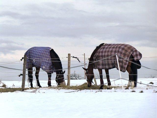 Caballos abrigados con mantas.