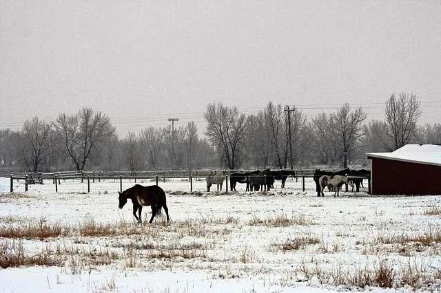 El forraje o el heno son los alimentos más recomendados para los caballos en invierno.