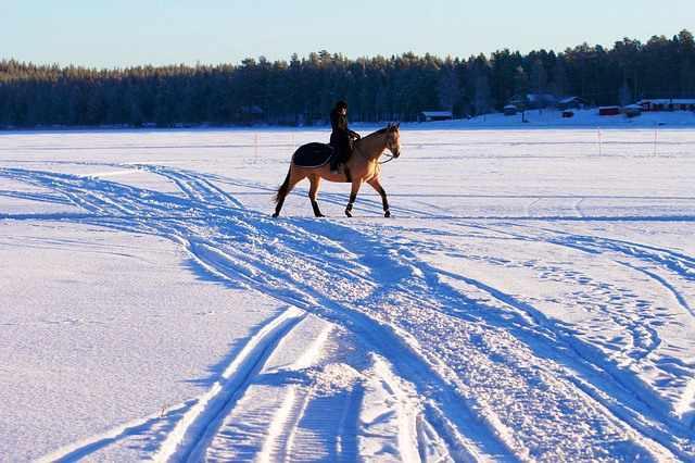 Jinete monta a caballo en invierno.