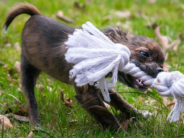juguete para perro chihuahua