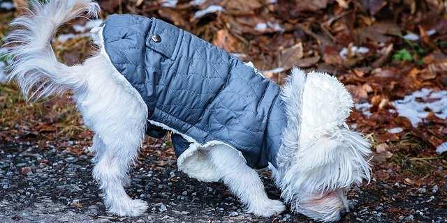 Perro con abrigo puesto.