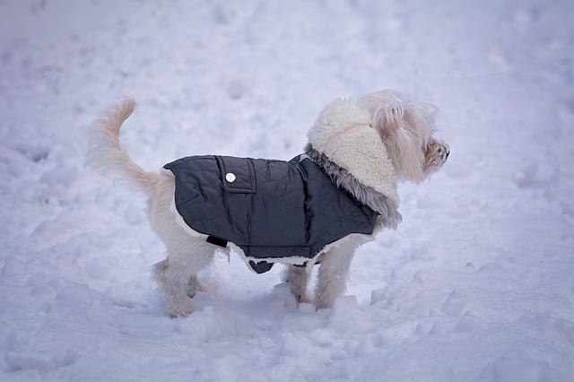 Cómo son deben ser los abrigos para perros