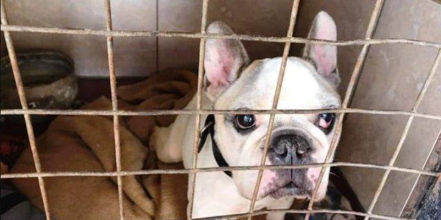 Cholo, el perro que se ha reencontrado con su dueña 11 años después.