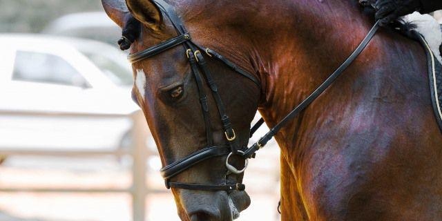 Los caballos en China.