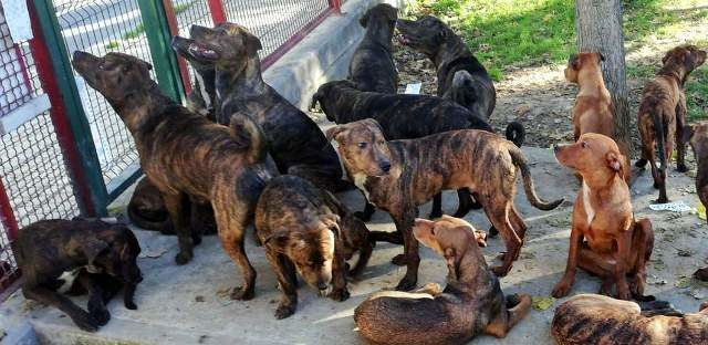 Los 18 perros abandonados en Sevilla (Foto: Twitter Emergencias Sevilla)