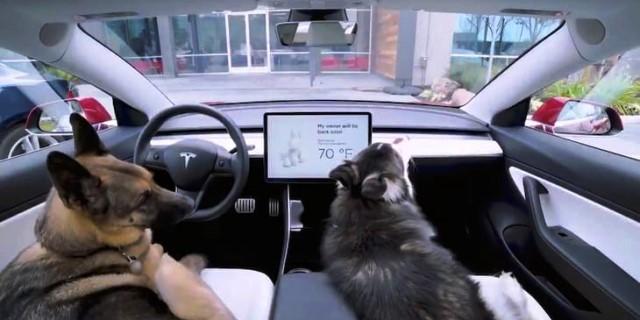 Dog Mode de Tesla
