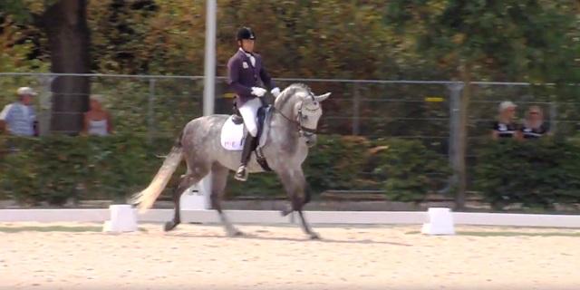 caballo PRE compitiendo