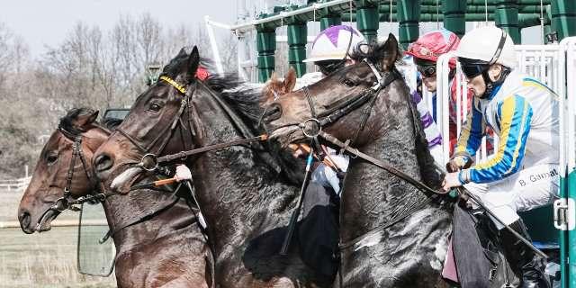Arranque de una carrera de caballos