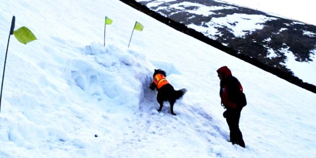 El rescate del perro en la nieve