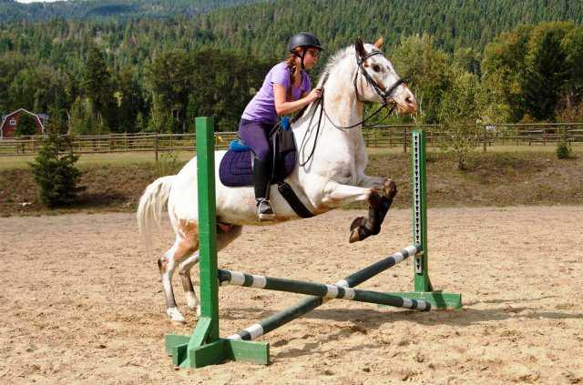 Jinete monta al caballo Endo