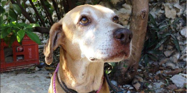 Deko, el perro que vende postres para pagar su quimioterapia