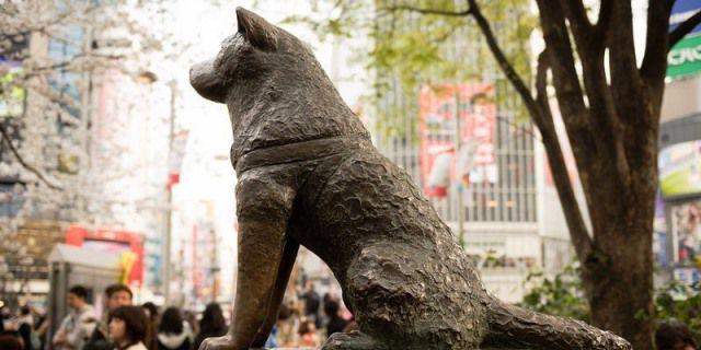 estatua de Hachiko
