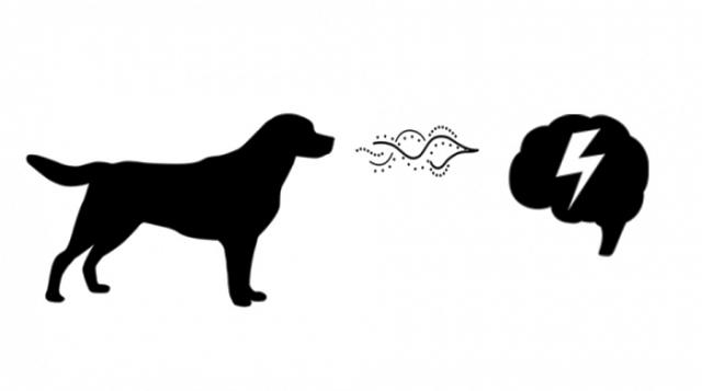 Perro detecta el olor