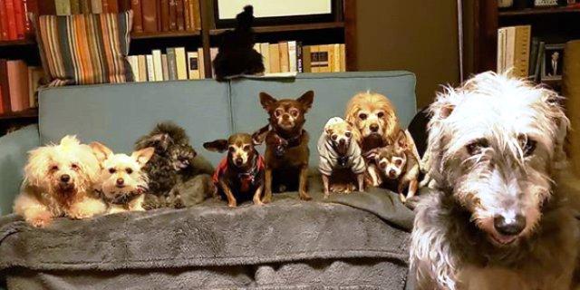 foto de un sofá lleno de perros