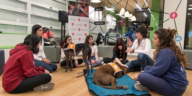 terapias con perros en la Complutense