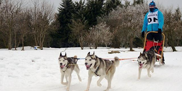 Mushing con perros