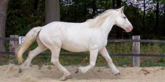 caballo Boulonnais
