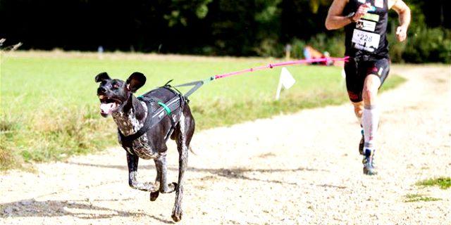 PIRINEOS DOG FESTIVAL CANICROSS