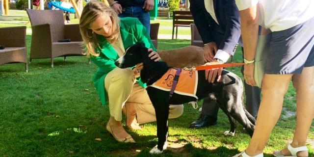 Este fue uno de los perros llevados al Retiro para fomentar las adopciones responsables
